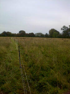A long electric fence! The sheep are somewhere in the back ground