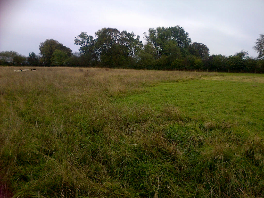 Area to the right was cut for hay in July then grazed late August, to left un-grazed since April.