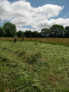 Haymaking on the Top Field, summer 2014