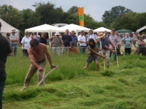 Team mowing at the West Country Scythe Festival