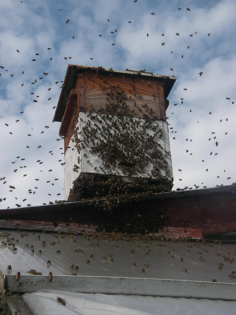 The bees steadily walked into the hive