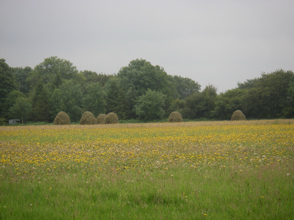 Hay racks in the drizzle. The foreground is an area re-flowering that were mown in May / June