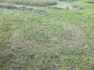 horseshoe-created-in-the-grass.JPG