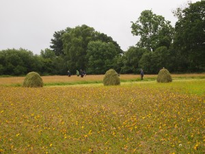 Mowing in the field, hay racks in foreground