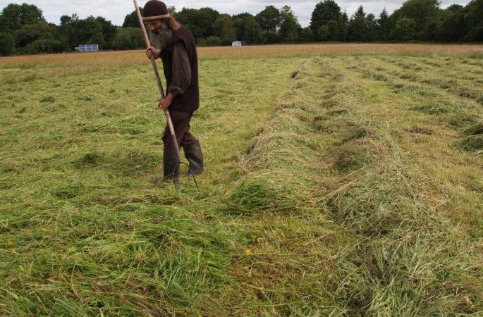 Spreading the hay