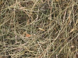 Underneath, good dry hay